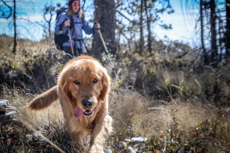 hiking con tu compañero de aventuras