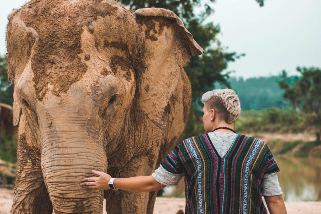 Voluntario acariciando a un elefante