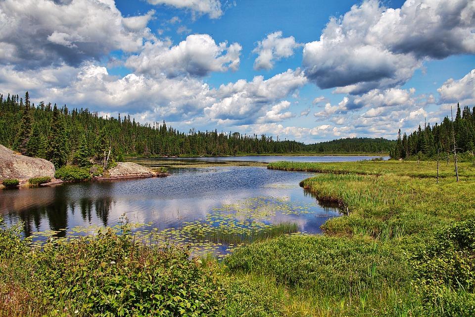 algonquin park, destinos Canadá