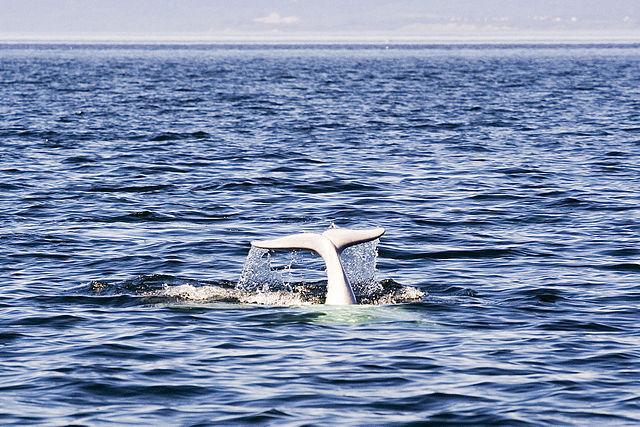 ballenas Canada, los 10 mejores destinos de aventura en Canadá
