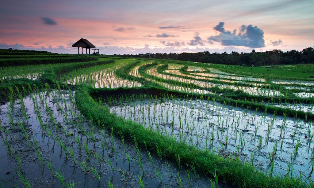 Lovina, destinos que tienes que visitar en Bali